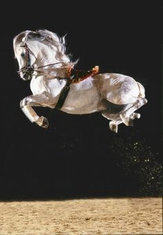 Must go see...can your horse do this?