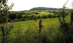 Gut für die Nerven zum Entspannen, so ein Spaziergang durch`s Grüne. :-)