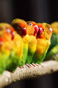 """(via 500px / Photo """"Lovebirds whispering"""" by Laurent Caille)"""