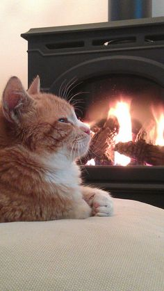 Kitty staying warm cuddled up by a toasty fire.
