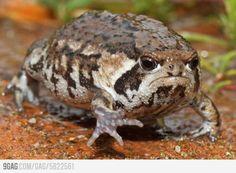 Grumpy Frog!