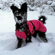 Mops' new coat from IQO.