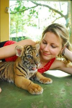 Tiger Kingdom, Chiang Mai, Thailand. Well apparently I What an amazing luck of this tiger !!!!