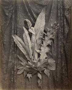 Charles Aubry (French, 1811 - 1877). '[An Arrangement of Tobacco ...