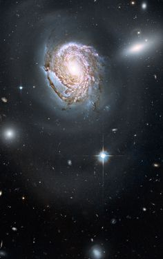thedemon-hauntedworld:  Spiral galaxy NGC 4911 in the Coma Cluster A long-exposure Hubble Space Telescope image shows a majestic face-on spiral galaxy located deep within the Coma Cluster of galaxies, which lies 320 million light-years away in the northern constellation Coma Berenices. The galaxy, known as NGC 4911, contains rich lanes of dust and gas near its centre. These are silhouetted against glowing newborn star clusters and iridescent pink clouds of hydrogen, the existence of which…