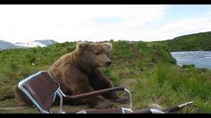 Медведь - рыбнадзор Пришёл, увидел и ушёл Случай на рыбалке