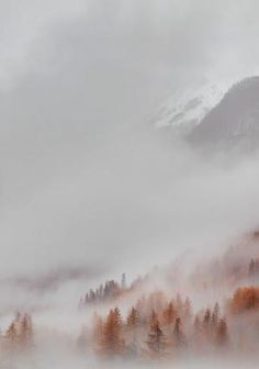 A beautiful fall fog. A beautiful fall fog. A beautiful fall fog. Beautiful World, Beautiful Places, Beautiful Pictures, Landscape Photography, Nature Photography, Photography Ideas, Dreamy Photography, All Nature, Foto Art