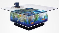 Fish tank coffee table. Absolutely beautiful.