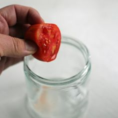 how to harvest tomato seeds <3