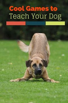 Pet Training - Enjoy a little bonding time during dog training with these five cool games you can teach your dog. Your pup will learn new skills while having fun! This article help us to teach our dogs to bite just exactly the things that he needs to bite Love My Dog, Dog Games, Games For Puppies, Golden Retriever, Labrador Retriever, Dog Training Tips, Potty Training, Training Classes, Training Schedule