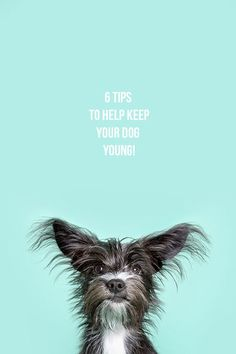 6 tips to help keep your dog young.  {Photo by @Tonya Seemann Seemann Seemann Seemann Seemann Seemann Pet Photography}   Pawsh Magazine