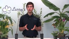 How to Grow Olives - Video Growing Guide