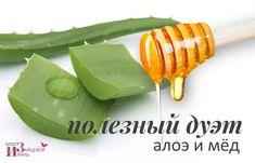 Алоэ с медом. Натуральное лекарство для здоровья и красоты | Блог Ирины Зайцевой