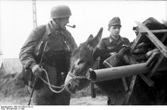 Geraman soldiers with a donkey - Normandy 1944