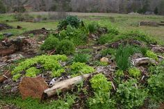Building a Hugelkultur Raised Bed (All Things Plants)