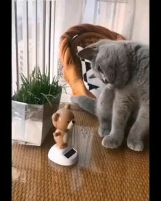 Cute Baby Cats, Cute Cats And Kittens, Cute Little Animals, Cute Funny Animals, Kittens Cutest, Funny Cats, Cute Animal Videos, Funny Animal Pictures, Gato Gif