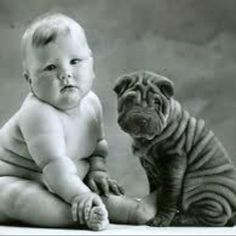 The shar pei pup is normal. The human infant has macrosomia, likely from an obese or diabetic mother. Still, the comparison is humorous.