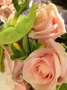 rose e anturium