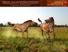 Allohippus chase by RomanYevseyev.deviantart.com on @deviantART
