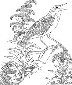 1000 Images About Birds On Pinterest Free Printable