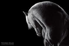German photographer Wiebke Haas captures the wild beauty and elegance of horses - My Modern Met