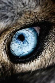 Such beautiful baby blue eye's