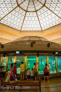 Save money on family vacations in Chicago. Love these tips for cutting costs on the major attractions like the Shedd Aquarium in downtown Chicago. Help keep to your budget for family vacation while introducing your kids to the windy city.