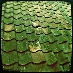 GREEN GREEN GREEN ... Roof tiles by Leo Reynolds, via Flickr