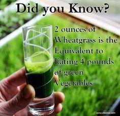 Safe Weight Loss Tips Shot of wheat grass