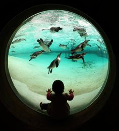 penguins fish eye