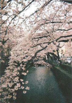 Read sadystyczny { 🔸 vol } japan from the story Some Stock by watt_graph (Wattpad Graphics) with 186 reads. Sakura Cherry Blossom, Cherry Blossoms, September, Jungkook Aesthetic, Seasons Of Life, Aesthetic Photo, Rainy Days, Rainy Night, Adventure Travel