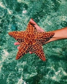 Find images and videos about summer, sea and ocean on We Heart It - the app to get lost in what you love. Ocean Creatures, Cute Creatures, Beautiful Creatures, Collage Mural, Photo Wall Collage, Beach Aesthetic, Summer Aesthetic, Tigh Tattoo, Images Kawaii
