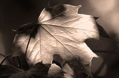 Writing Prompt - Words Falling Like Leaves
