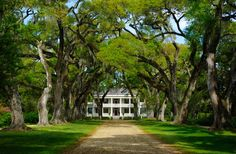 St. Francisville.To get your fill of graceful antebellum homes and antique shopping, head to St. Francisville. This small town has seven plantation homes that can be toured, including Myrtles Plantation, which is rumored to be haunted, and Greenwood Plantation, built in 1830. Visitors can also spend their time visiting public gardens, hiking, biking, or birdwatching.
