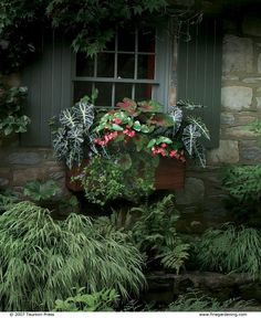 Shade Plants in Window Box