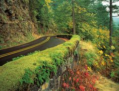 Historic Columbia River Gorge Highway, Oregon. Worth the drive, baby!