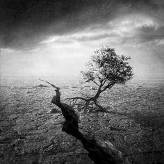 Walking Tree - Marmont Hill