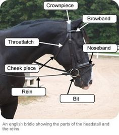 Parts Of A Western & English Saddles Yay!! I'm wanting ...