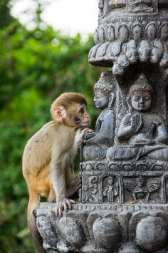 Feed temple monkeys (Swayambhunath Temple, Kathmandu, Nepal)