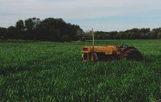 Unter bestimmten Bedingungen liefert die ökologische Landwirtschaft mehr Erträge als die konventionelle