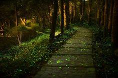 Fairy tale path.. https://www.facebook.com/65239508296/photos/pb.65239508296.-2207520000.1406224249./10151966319363297/?type=3