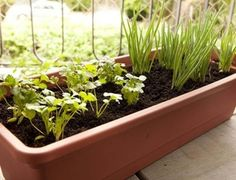 Ter horta de temperos é fácil. Veja como cuidar e melhorar os sabores e aromas…