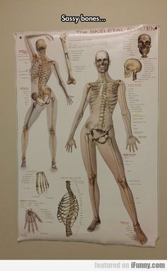 LOL doctor's offices need more anatomy posters like these. Would make the 45 minutes you sit in the office after your appointment time has come and gone more fun LOL