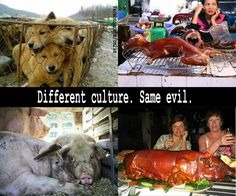 Yeah, so before you go condemning the Asian culture for brutally torturing and murdering dogs and cats for food--take a step back and look at where your food comes from. There is NO difference!