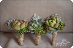 Burlap and Succulent Boutonnieres - the dusty miller is a really great accent to soften them a bit