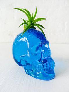 Air Plant Crystal Skull Garden Carved Blue by EarthSeaWarrior