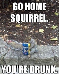 Go Home Squirrel Youre Drunk Funny Budlight