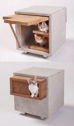 Bem Legaus!: Casas de gatos