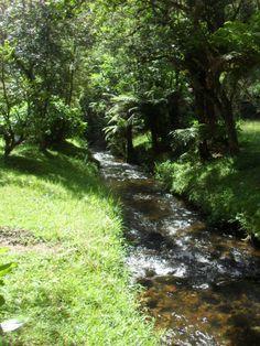 Riacho do Horto Florestal