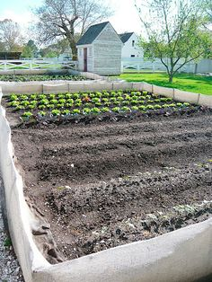 One of several vegetable gardens on the grounds. The IMP staff used chicken wire to keep rabbits out and shrouded the wire in burlap, which ...